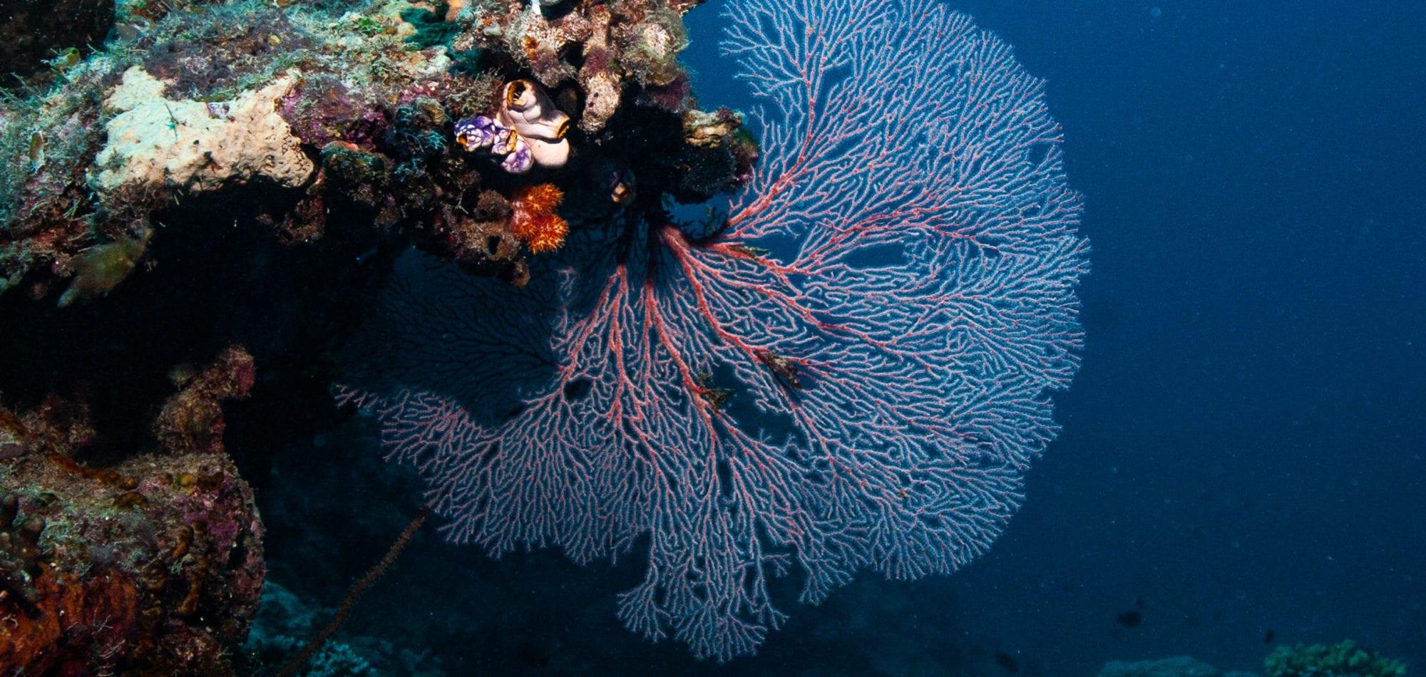 Cairns reef trip - Fan Coral, Great Barrier Reef