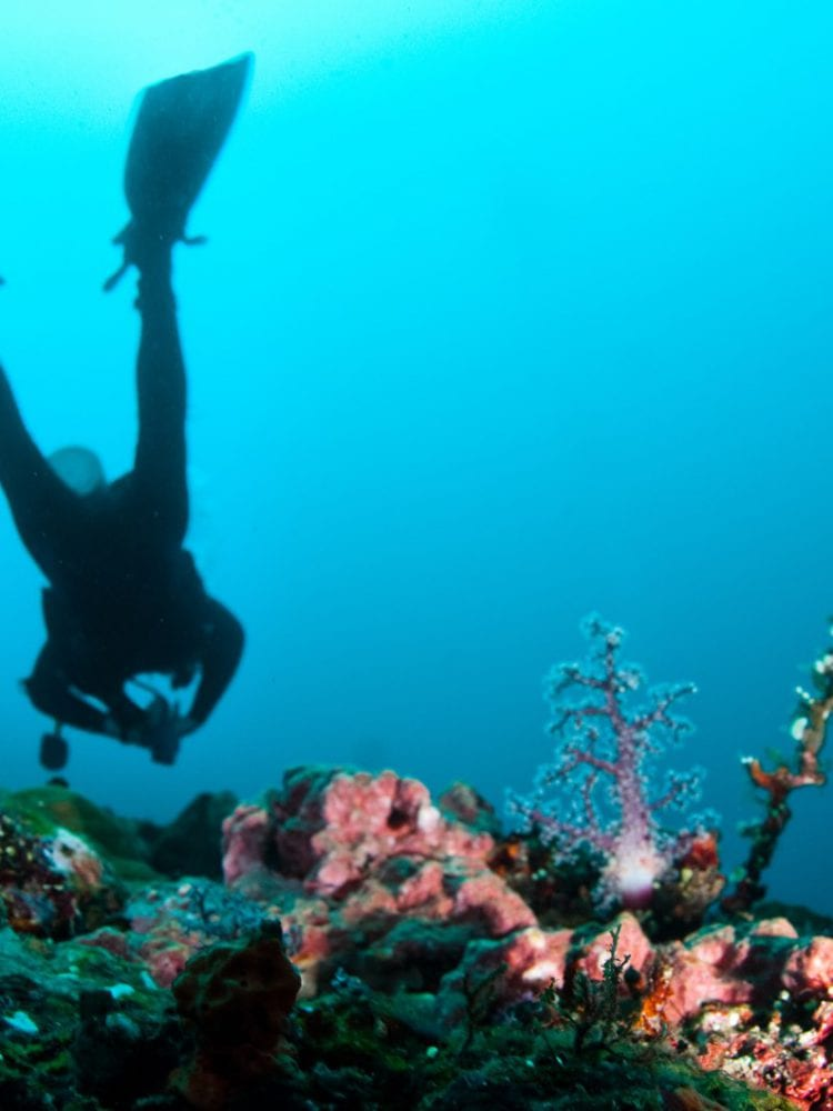 Cairns liveaboard scuba diving - diver photographing coral on Ribbon Reef, Queensland