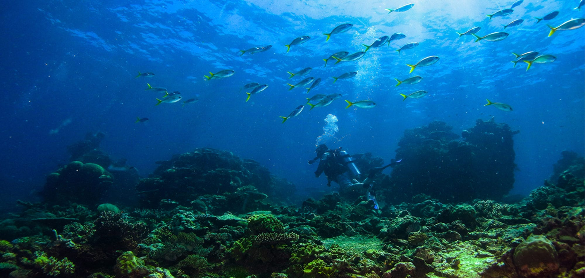 Cairns learn to scuba dive - diver amidst a school of fish
