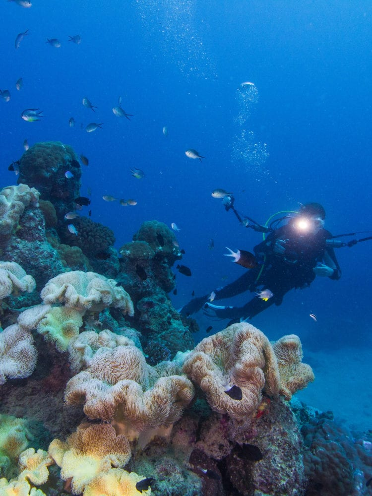 Cairns scuba diving - diver photographing fish on the Great Barrier Reef