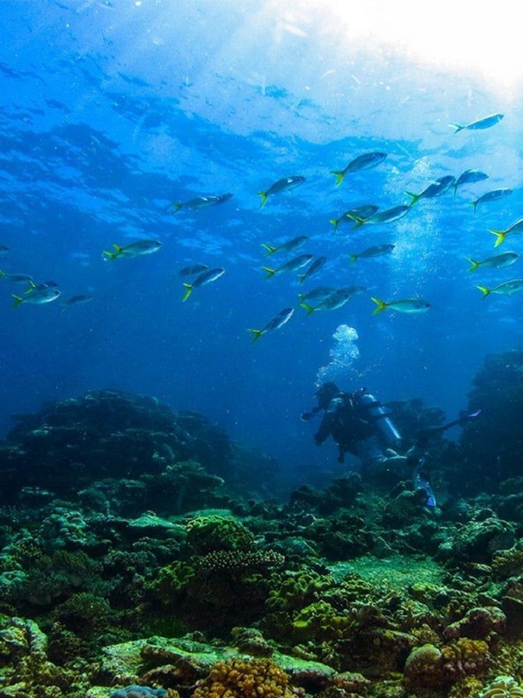 Dive In Australia scuba diving Great Barrier Reef - underwater seascape