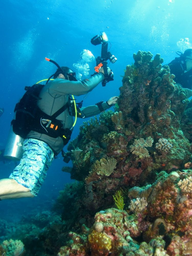 Cairns liveaboard scuba diving - scuba divers photographing coral on the Great Barrier Reef, Queensland