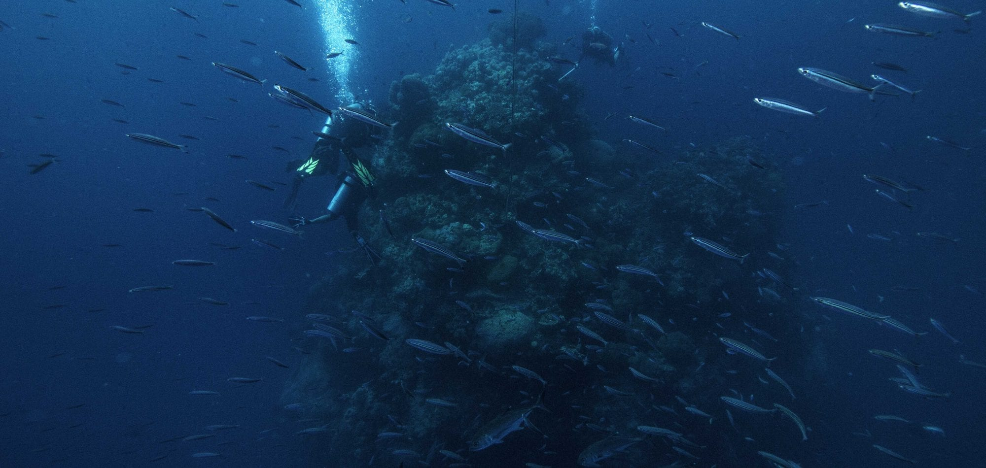 Ribbon Reefs diving - scuba divers near Coral Bommie