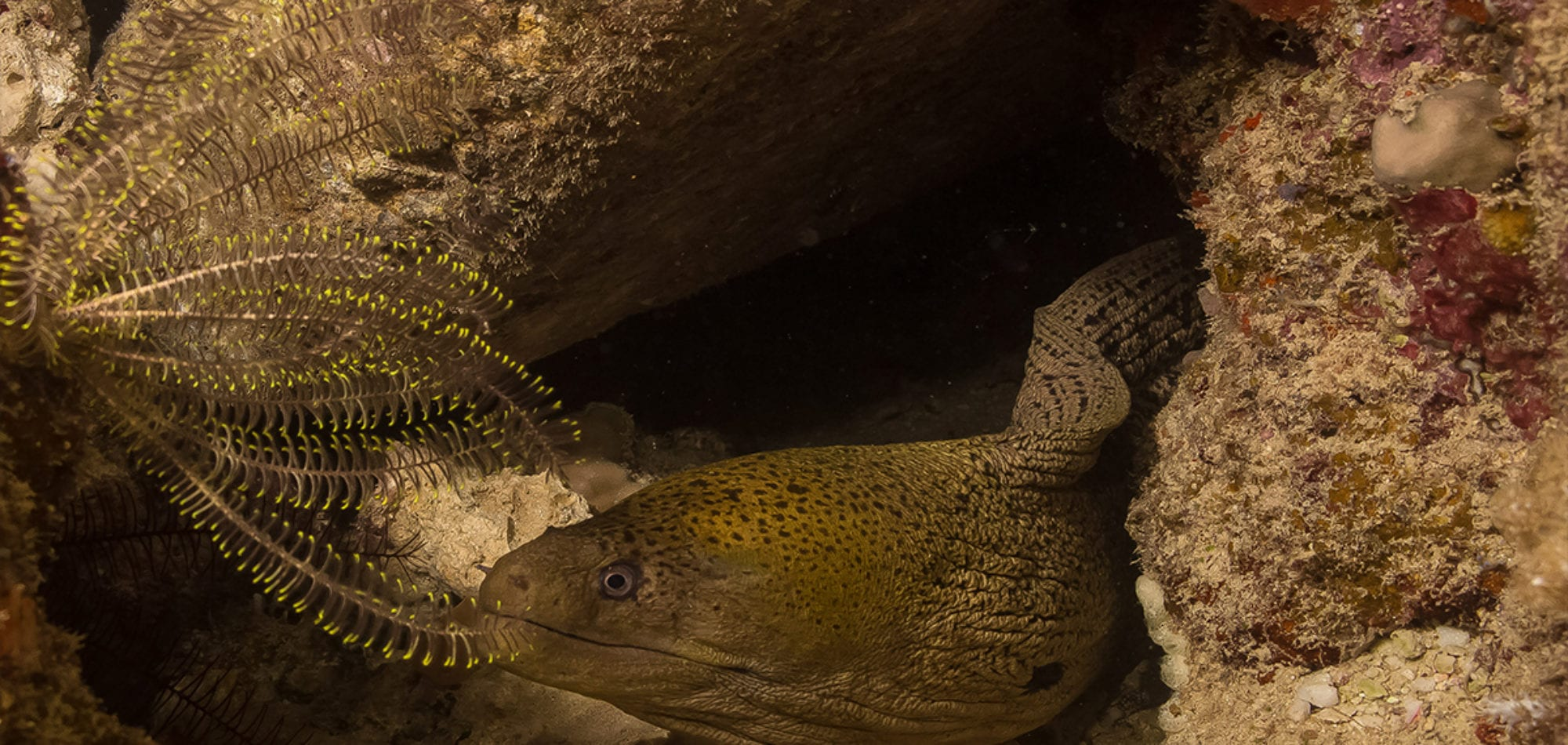 Mike Ball dive holiday - underwater image of a Moray Eel