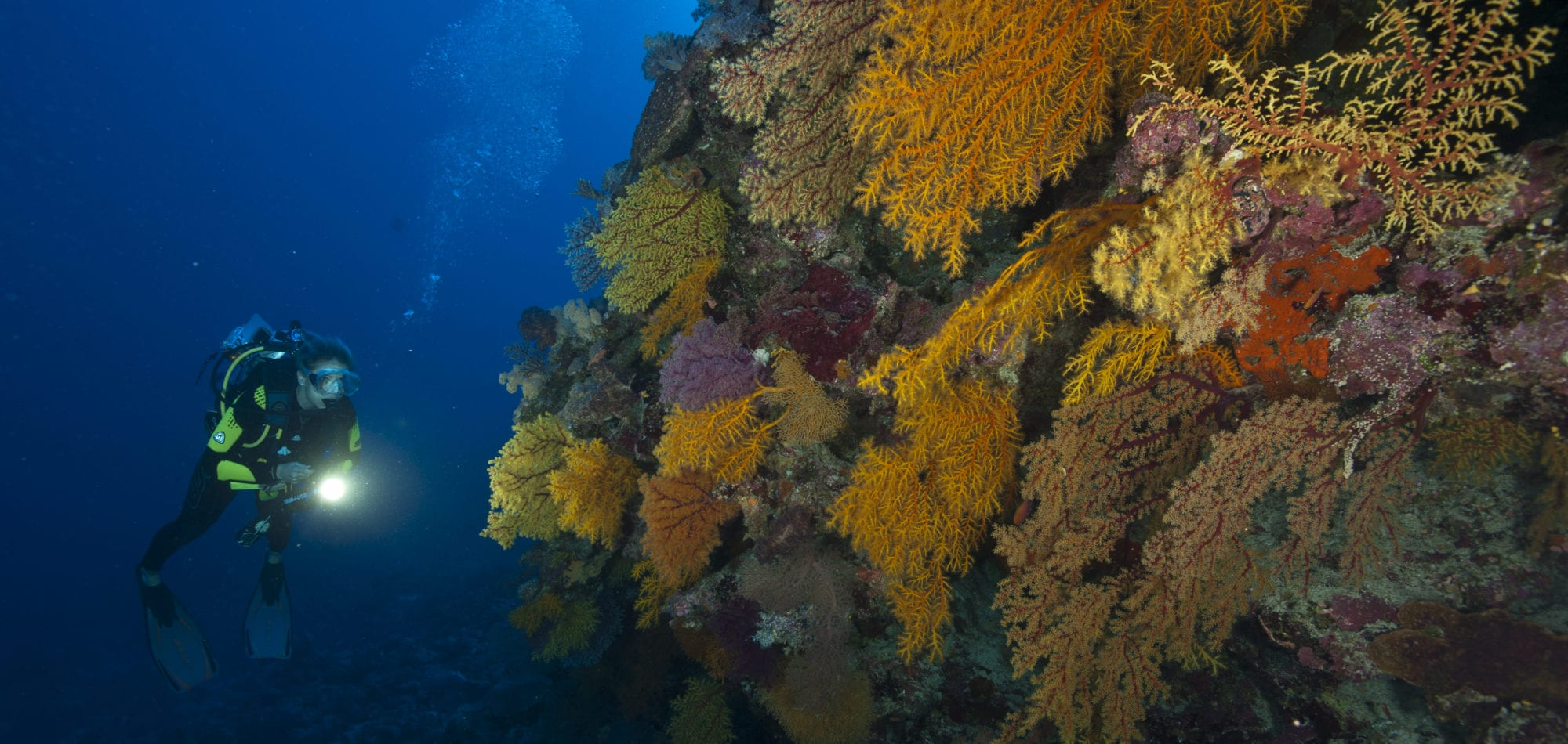Dive in Australia on the Spirit of Freedom - North Horn dive site