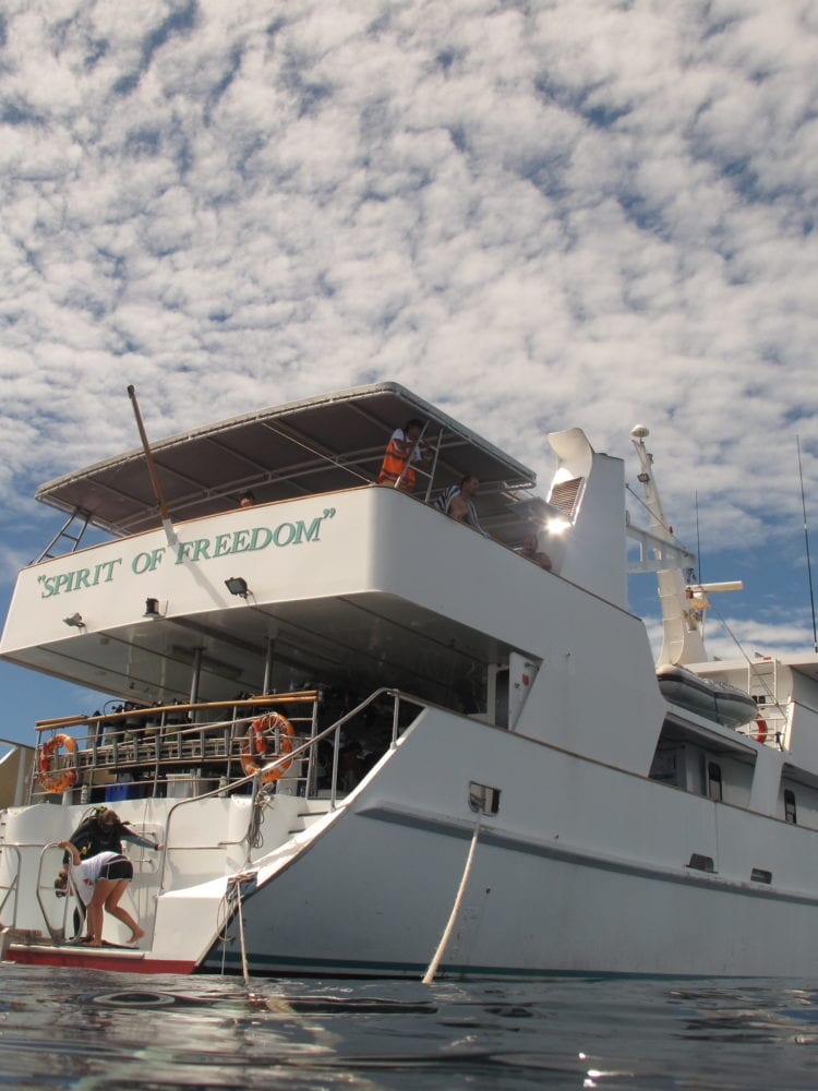 Spirit of Freedom, Great Barrier Reef - diver preparing to enter the water from back of the boat