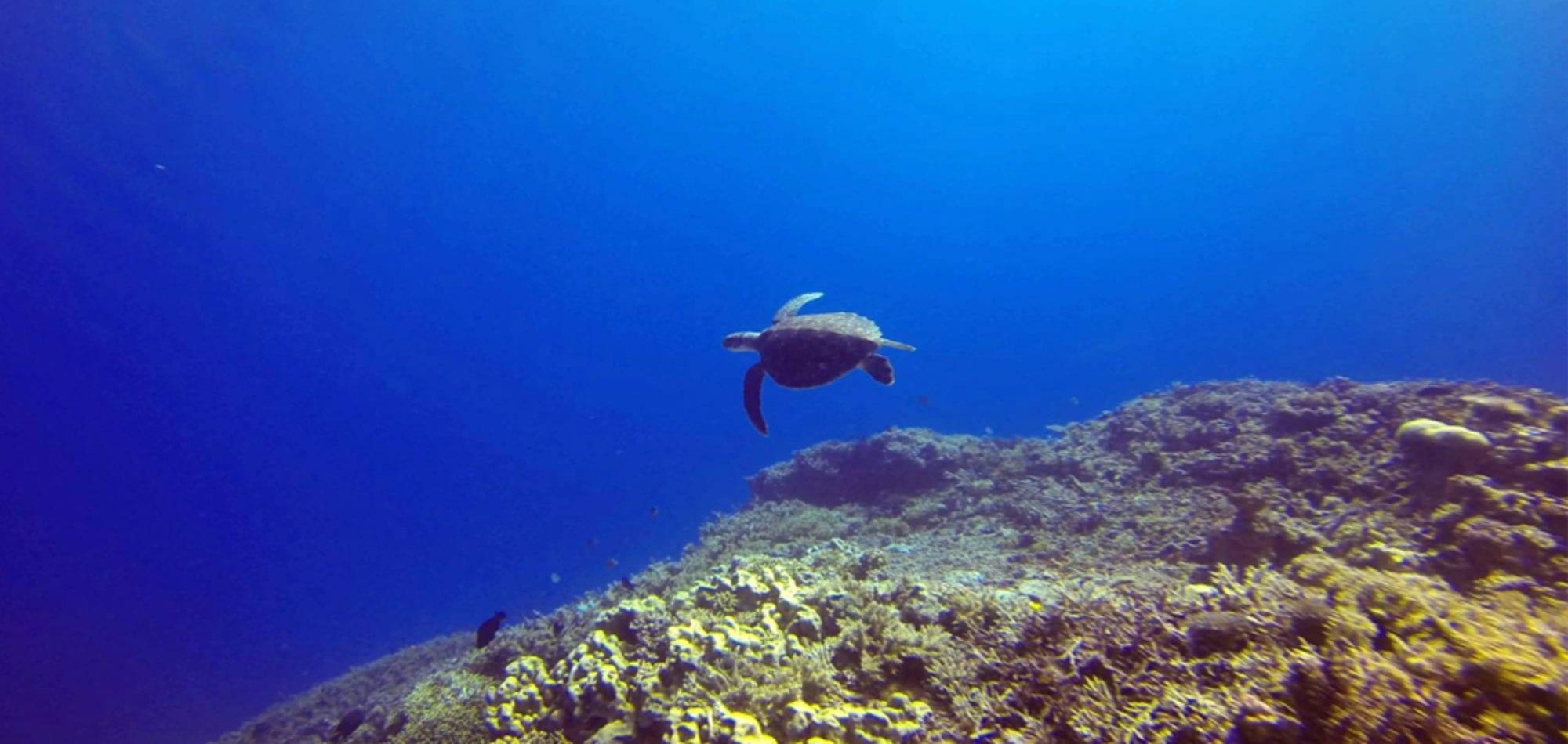 Sea Esta - Sea Turtle