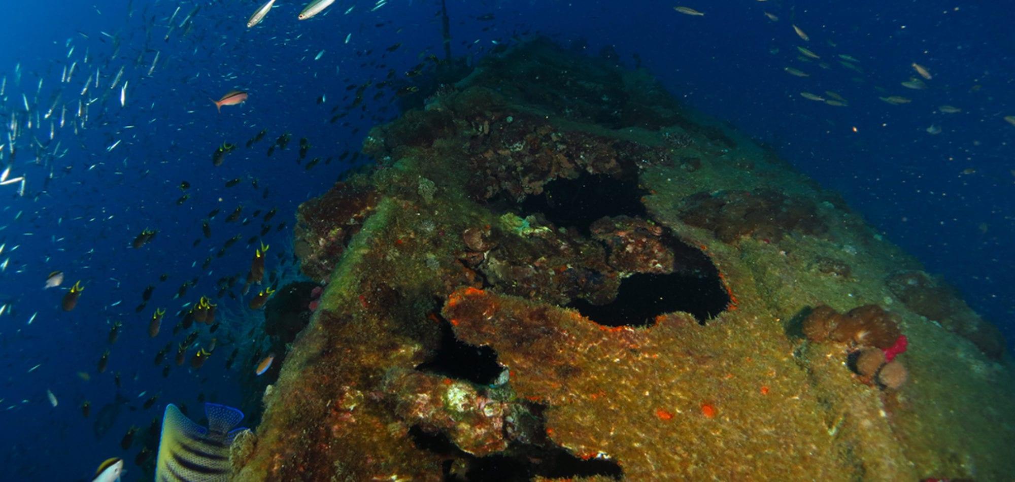 Dive in Australia - Yongala Shipwreck