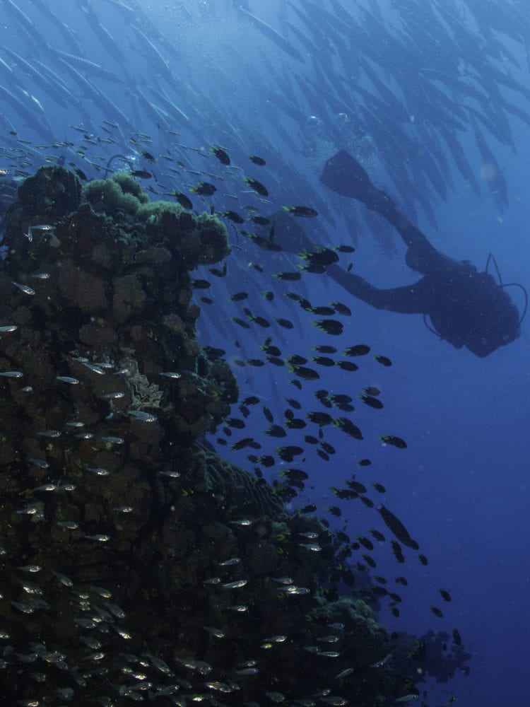 Dive Australia - diver at the SS Yongala dive site