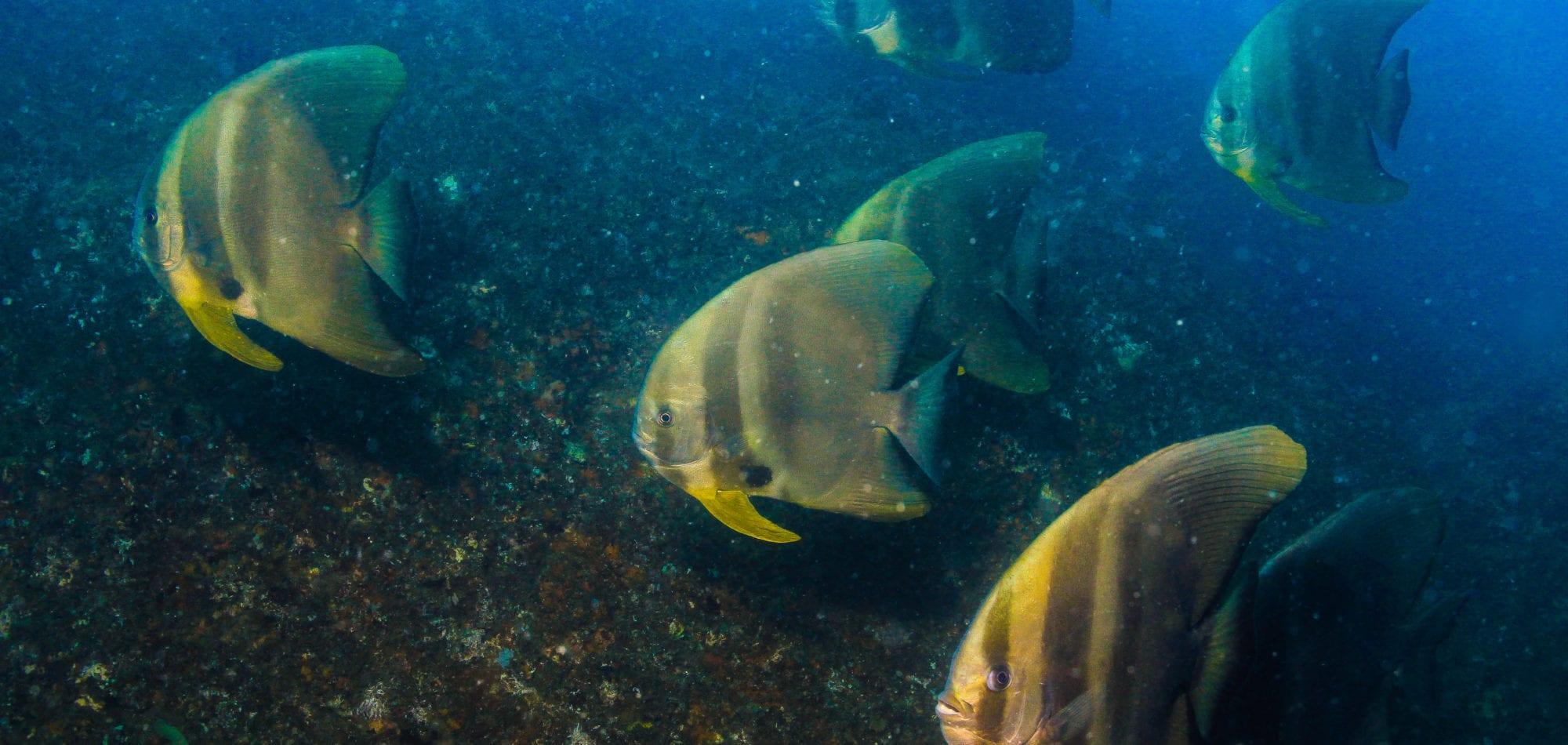 Scuba dive Australia - fish at Wolf Rock dive site