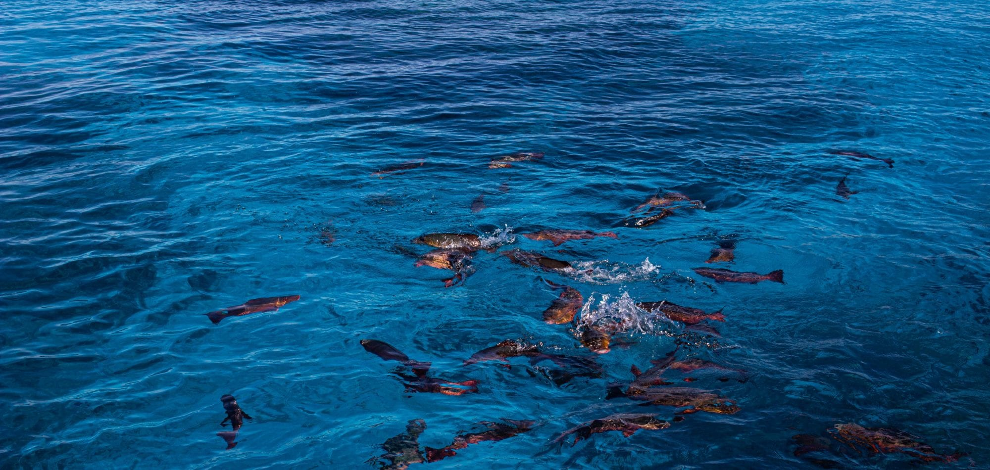 Cairns scuba diving day tour - shoal of fish on the surface