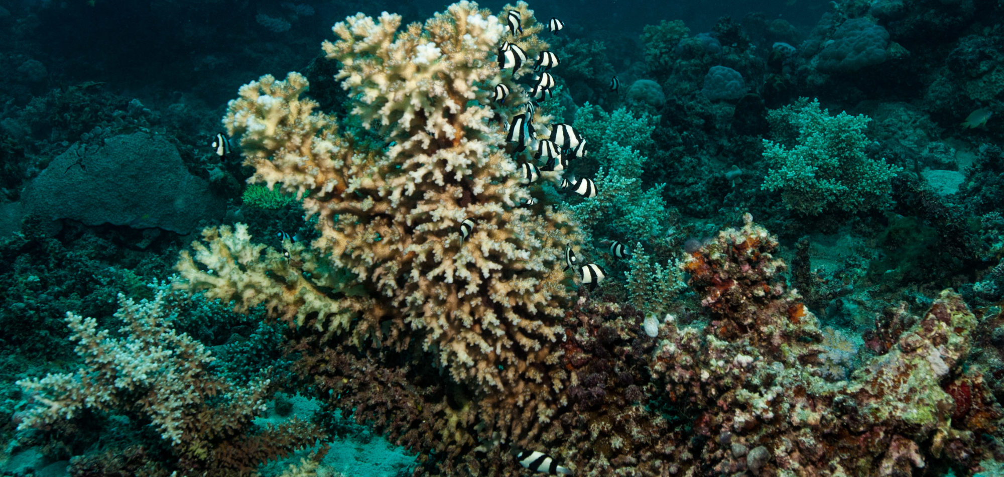 Hard Corals, Great Barrier Reef