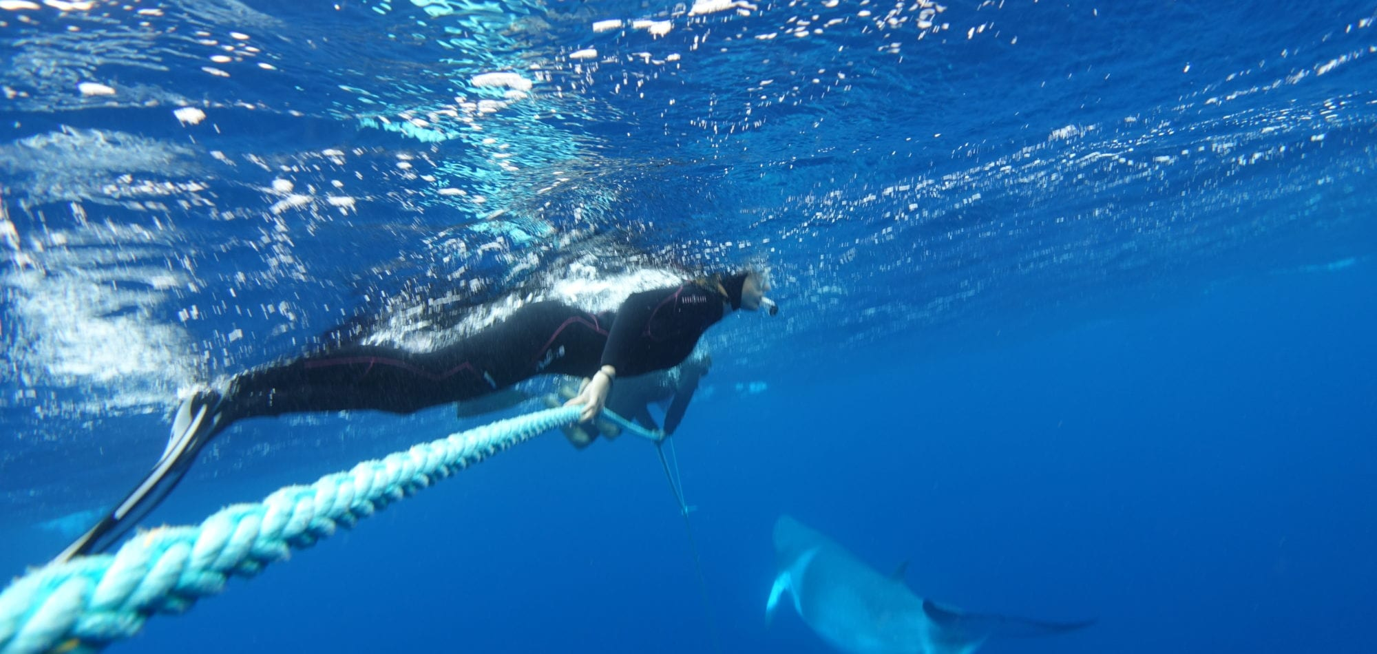 Minke Whale Ribbon Reefs