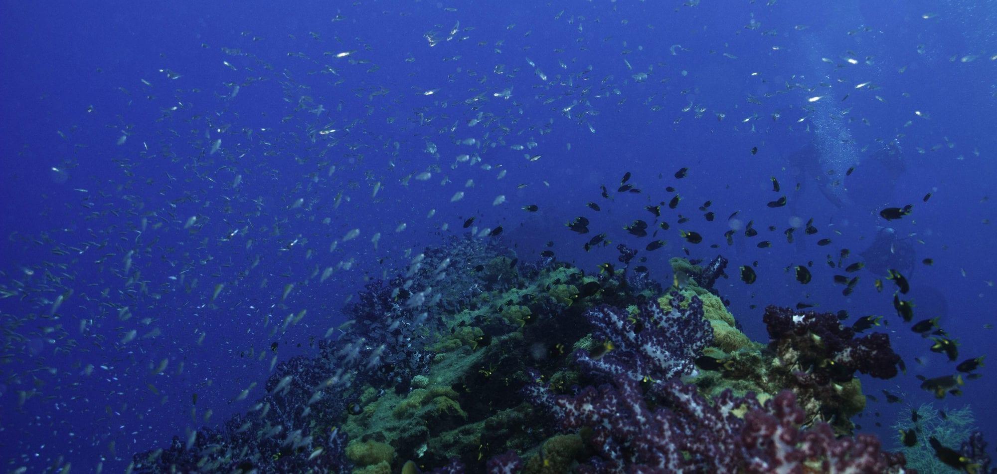 Scuba dive in Australia - Yongala Shipwreck