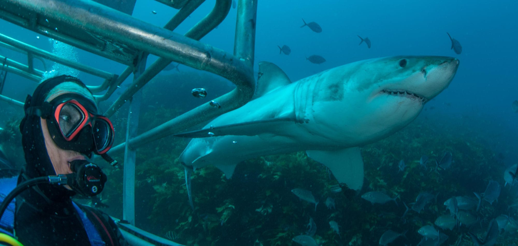 Great White Shark Ocean floor cage diving view