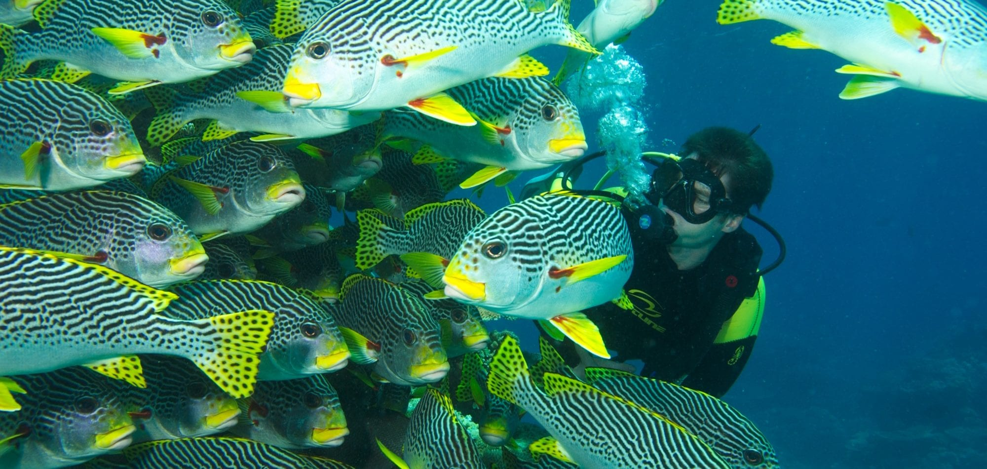 Diving the Great Barrier Reef - scuba diver from Spirit of Freedom with Sweetlip fish