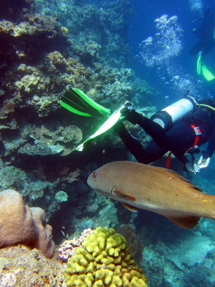 Cairns scuba diving day trip - diver with coral trout