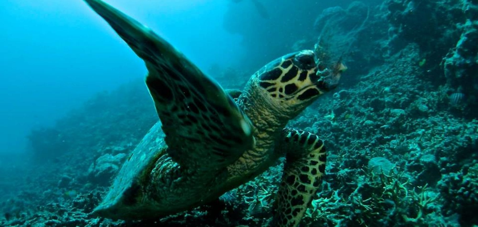 Cairns scuba diving day tour - Green Turtle, Great Barrier Reef