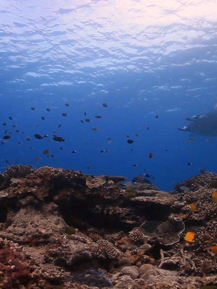 Diving on Lady Elliot Island