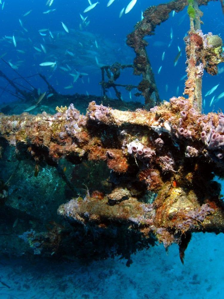 Lady Elliot Island - Severance Shipwreck