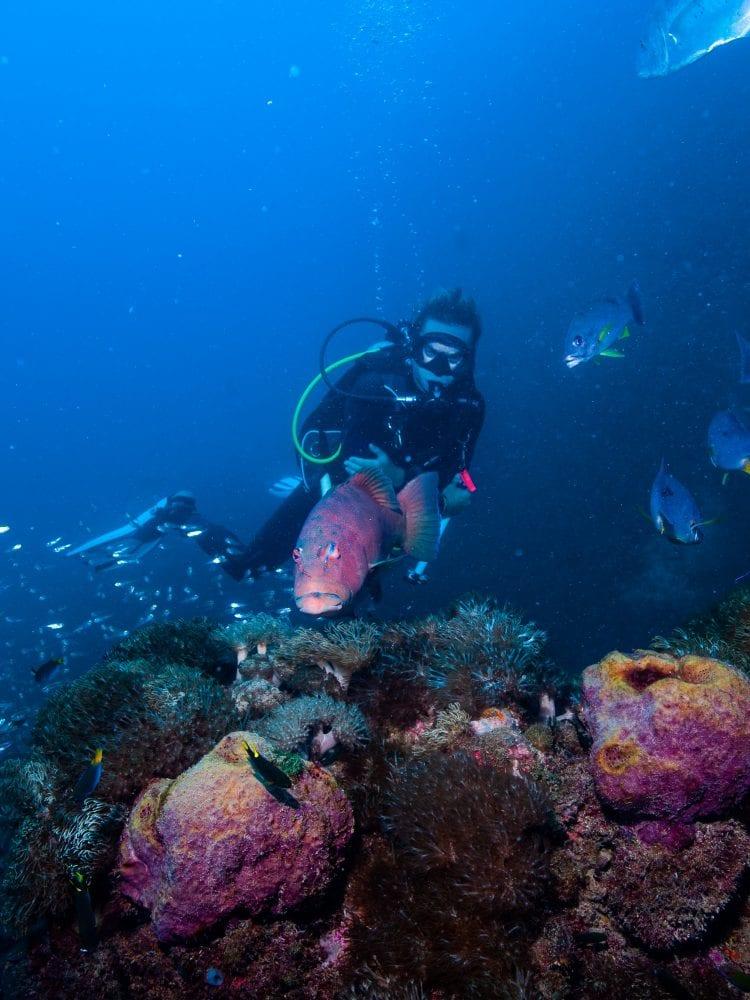 SS Yongala Shipwreck - wreck dive specialty dive site